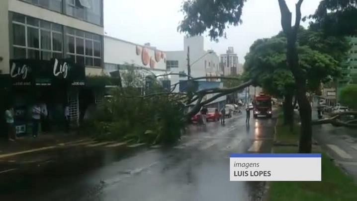 Árvores caem no meio da rua em Chapecó