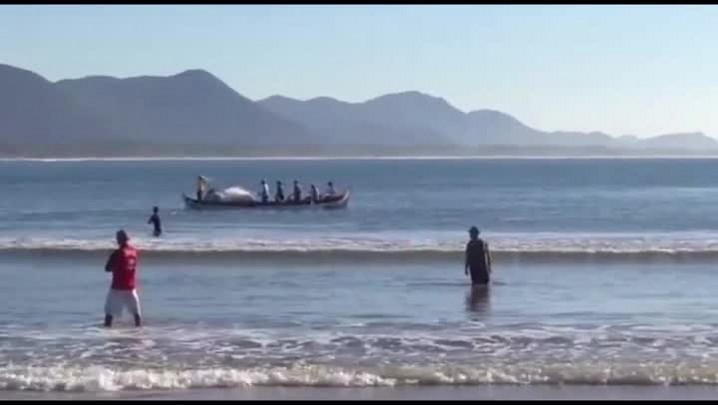 Cerco de duas mil tainhas na Barra da Lagoa em Florianópolis