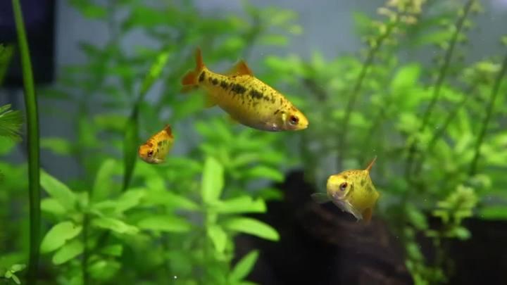 Confira dicas para começar um aquário