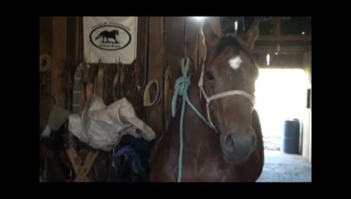 Égua é preparada com aplique de megahair
