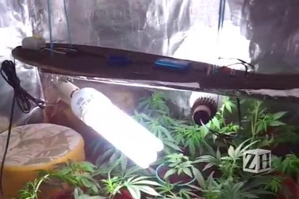 Polícia apreende drogas sintéticas e pés de maconha em casa de adolescentes em Gramado
