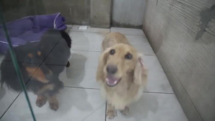 Conheça o spa e resort para cães