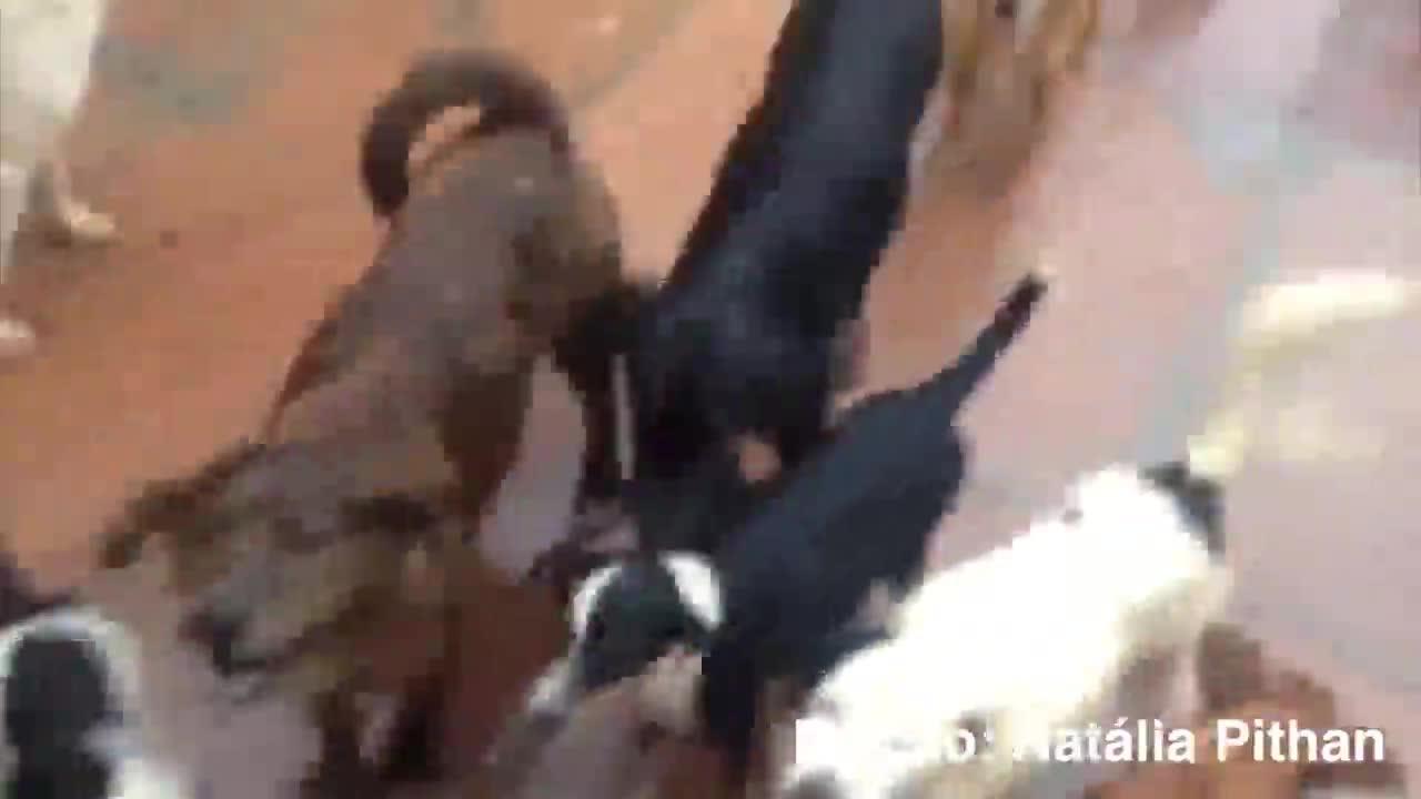 Homem que cuida de 60 cães e 14 gatos pede ajuda após alagamentos - 11/11/2013