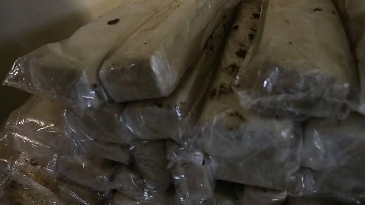 Carga de uma tonelada de maconha é apreendida em Santo Amaro da Imperatriz