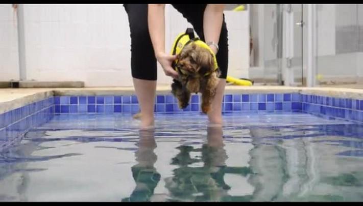 Espaços de Caxias oferecem recreação para cachorros