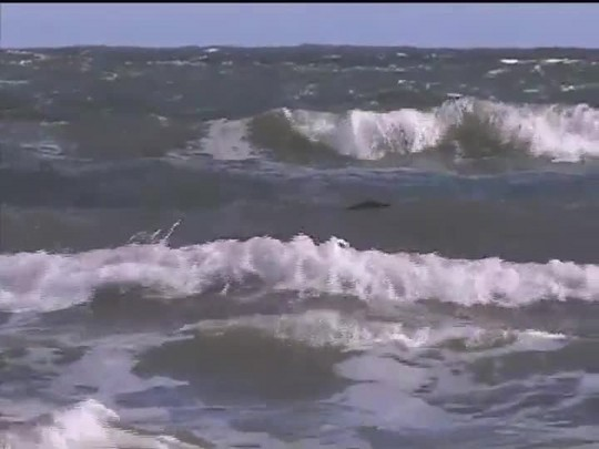 TVCOM 20 Horas - Jacaré visto na praia do Cassino não foi encontrado - 09/02/15