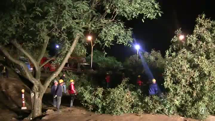 Veja imagens do corte das árvores na Avenida Beira-Rio