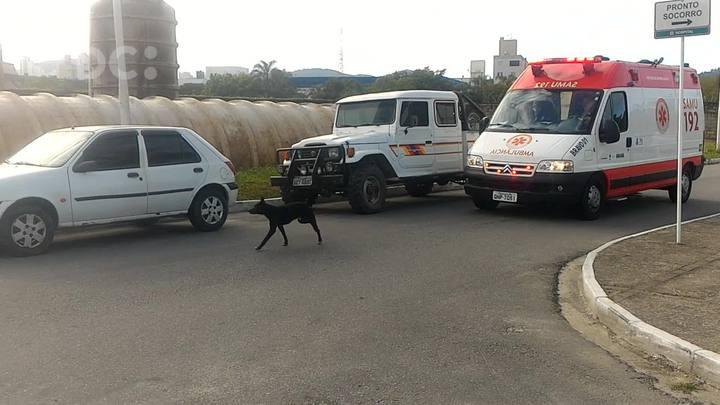 Há oito meses cachorro aguarda o dono em frente ao hospital