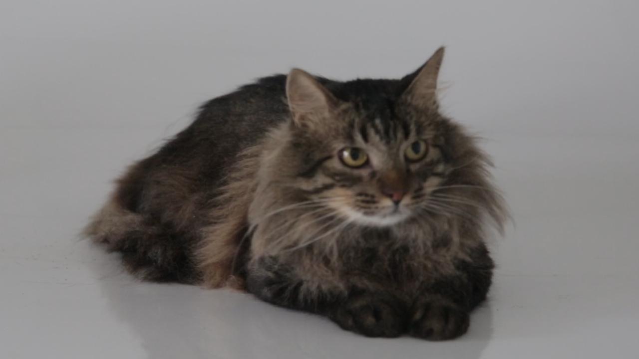 Top 5 ZH: gatos que revolucionaram a internet