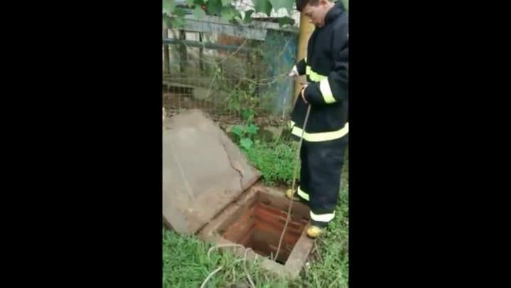 Bombeiros de Araquari resgatam animalzinho de tubulação