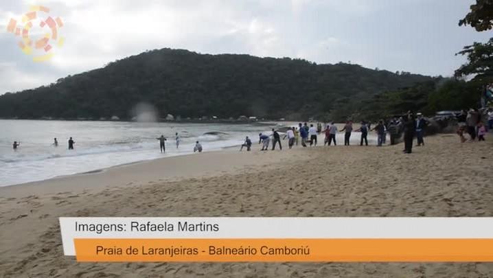 Quase 2 mil Tainhas caem na rede na Praia de Laranjeiras, em Balneário Camboriú