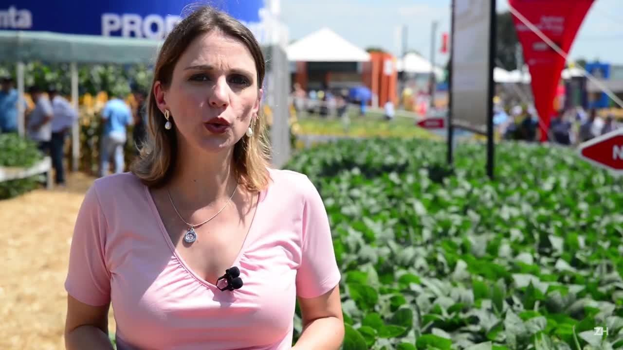 Gisele Loeblein: mar de soja no Rio Grande do Sul