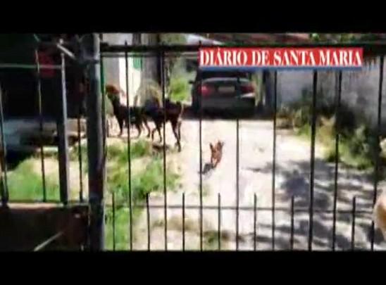 Cães vítimas de maus-tratos são resgatados em Santa Maria
