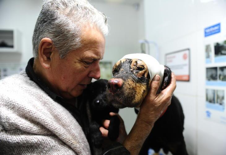 Reencontro emocionante de protetor com cachorrinha que salvou filhotes de incêndio criminoso