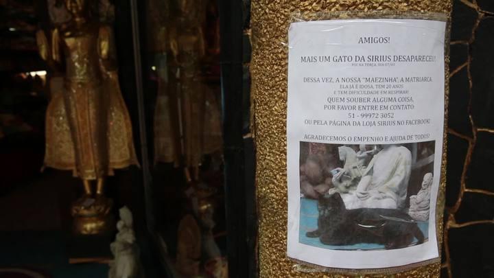 Gata da loja Sirius, na Cidade Baixa, desaparece
