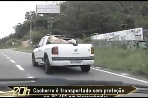 TVCOM 20 Horas - Cachorro é transportado sem proteção na SC-401 - 24.12.14