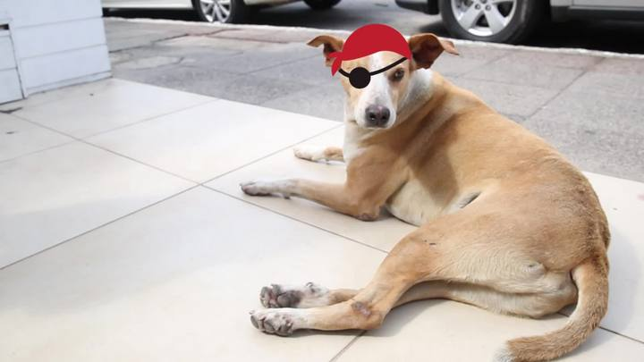 Meu PET no DC #10: O cão pirata