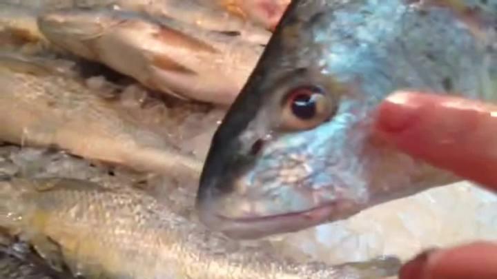 Dicas para comprar o peixe certo para a Semana Santa