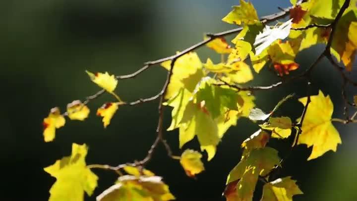O outono em imagens