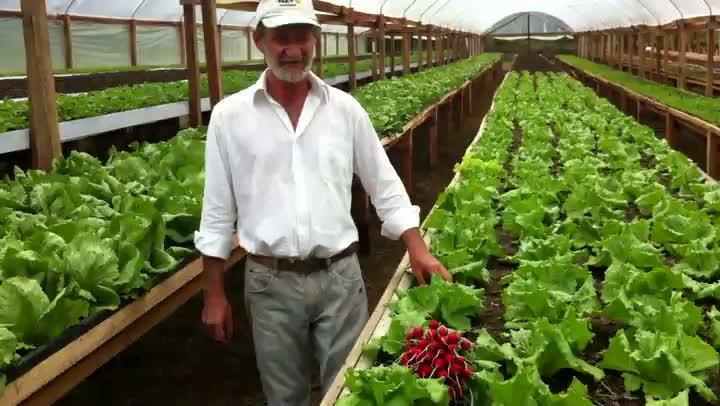 Casal de Westfália é pioneiro no cultivo de hortas suspensas