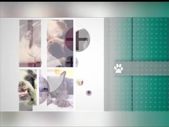 TVCOM Tudo Mais - \'Tudo+ Pet\': Entenda como funciona a microchipagem para identificação de animais