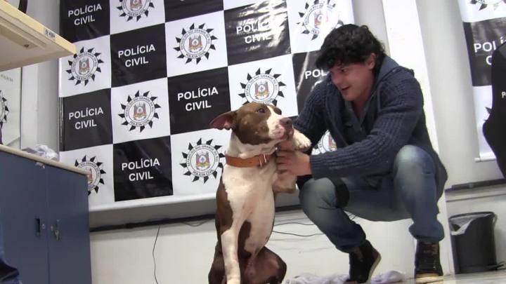 Órfão de execução do tráfico, cachorro é adotado por policiais