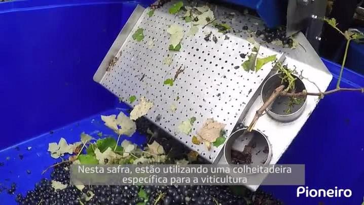 Colheita da uva mecanizada