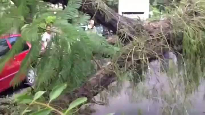 Árvore cai e atinge veículos no bairro Higienópolis.