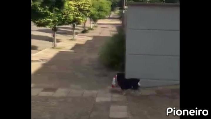 Cachorro de Paraí faz sucesso na internet por carregar o próprio pacote de ração
