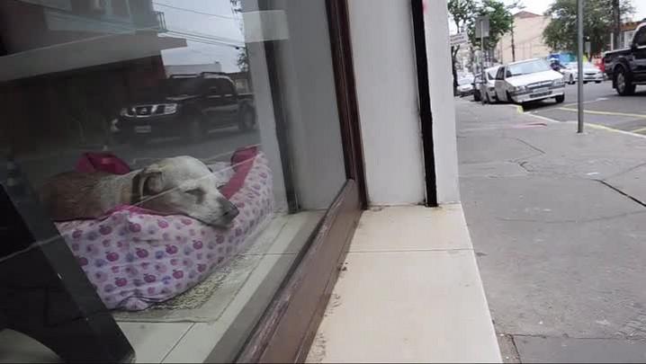 Meu Pet é Pop: Duda, a cachorra de vitrine do Espanhol Chaveiro