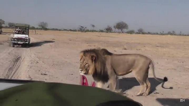 Zimbábue quer extradição de caçador
