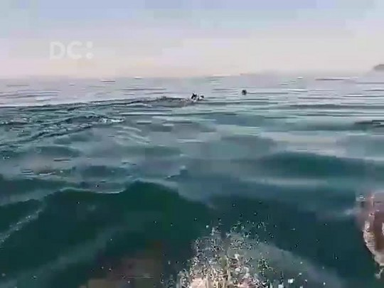 Leitor registra golfinhos na Barra da Lagoa, em Florianópolis