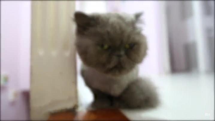 Veterinária ensina a fazer fluidoterapia em gatos