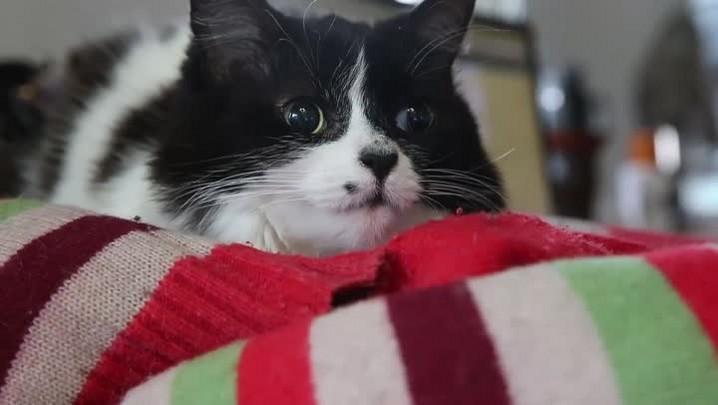 Meu PET no DC #3: no #catloversday, conheça uma adoção muito corajosa