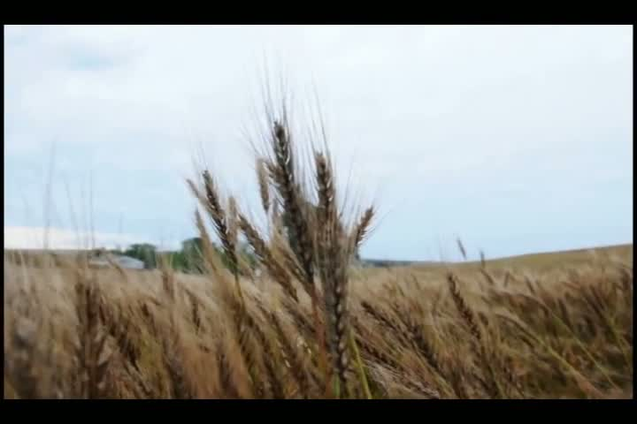 Clima castiga lavouras gaúchas