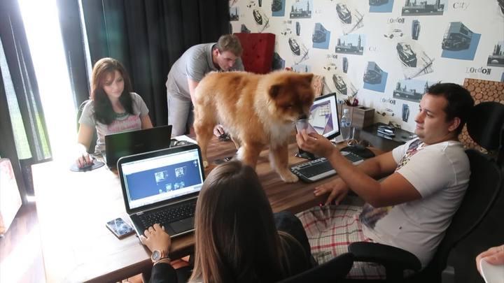Meu PET no DC: animais no escritório