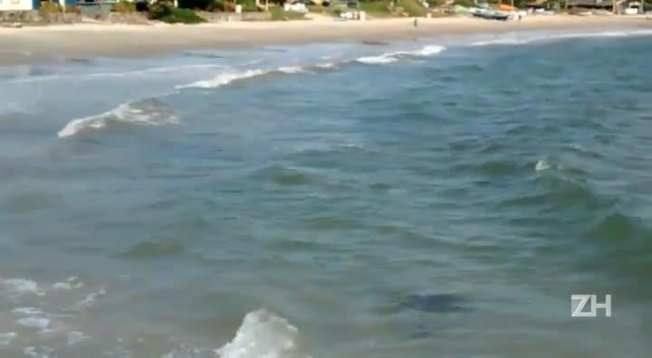 Leitor registra pinguins na praia dos Ingleses, em Florianópolis