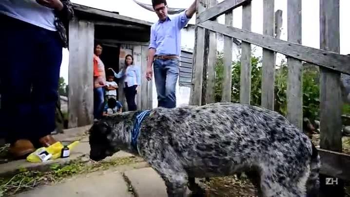 Envenenamento de animais choca Bom Jesus
