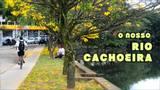 Vídeo mostra a vida que existe no Rio Cachoeira, em Joinville