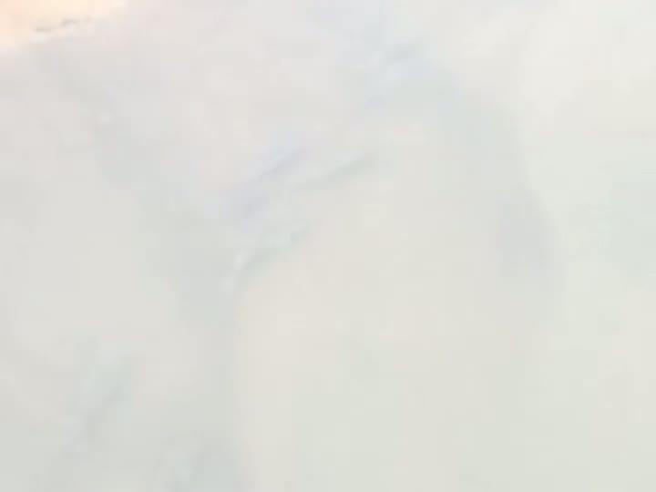 Cardume de tilápias em afluente do Rio Cachoeira