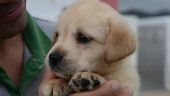 Cães-guias formados em Camboriú mudam a vida de deficientes visuais