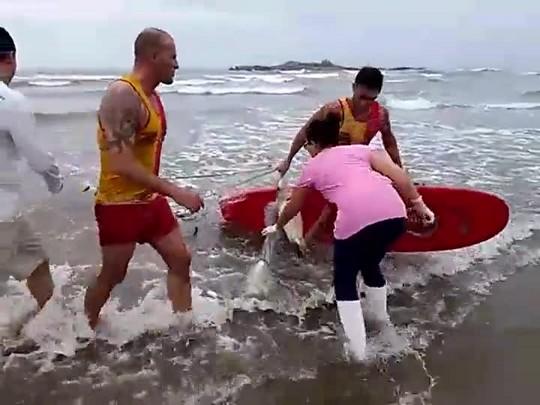 Tartarugas mortas em praia de Navegantes