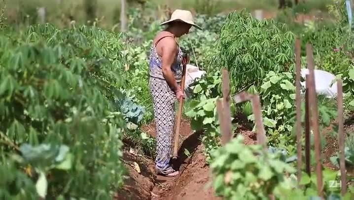 Agricultura ganha espaço em centros urbanos no Rio Grande do Sul
