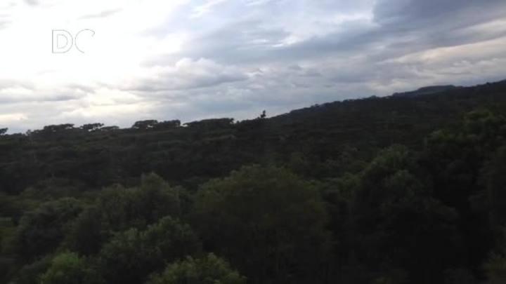 Conheça o Parque das Araucárias em São Domingos