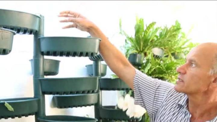 Dicas para montar uma horta em apartamento