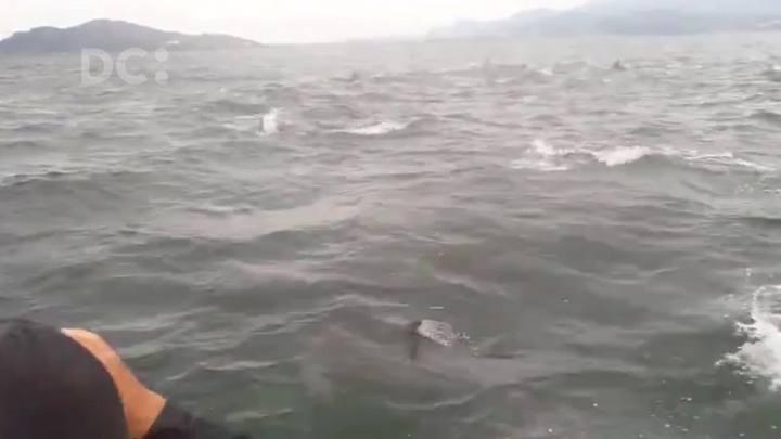 Pescadores registram grupo de golfinhos nadando ao lado da embarcação em Garopaba