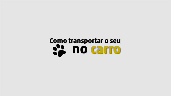 Como transportar seu pet no carro
