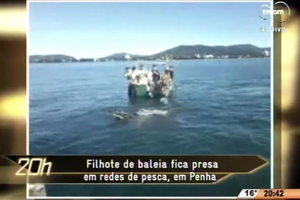 TVCOM 20 Horas - Filhote de baleia fica presa em redes de pesca, em Penha - 16.06.15