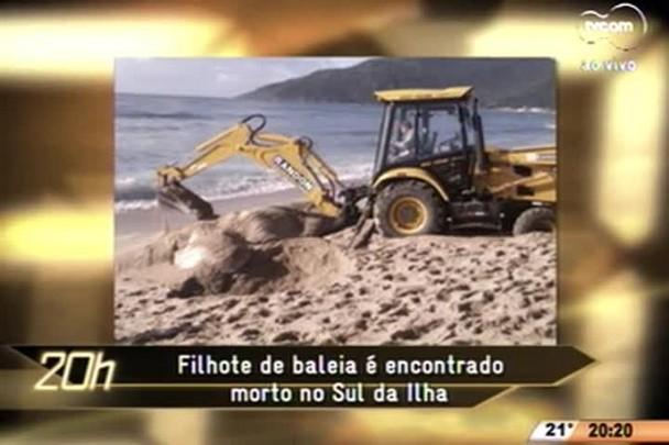 TVCOM 20 Horas - Diversas baleias jubarte são encontradas na costa catarinense este ano - 26.06.15