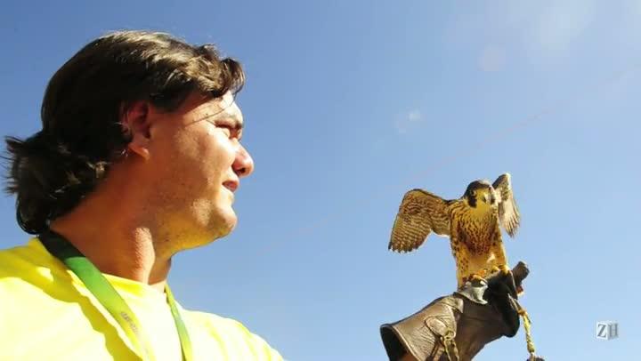 Na Expointer, falcões encantam público